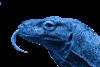 dragon_blue_100x67.png